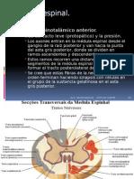 NEUROCIENCIAS Medula Espinal-modificada
