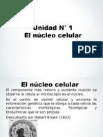 El Núcleo Celular