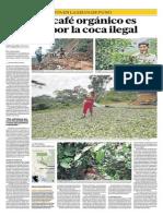El mejor café es cercado por la coca ilegal