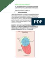 Analisis y Fabricacion de Chumaceras
