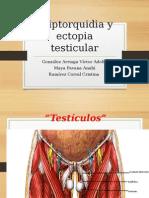 Criptorquidia y Ectopia Testicular TERM.modificado