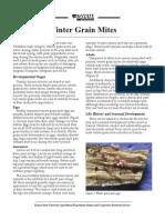 winter grain mites