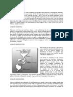 APARATOS Y SISTEMAS DE LAS AVES.doc