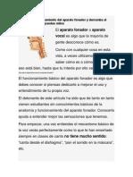 ¿Cómo Funciona El Aparato Fonador - V. T.