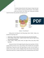 anatomi rinitis atrofi