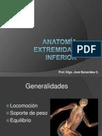 Anatomía Extremidad Inferior