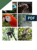 ANIMALES DE CENTROAMERICA