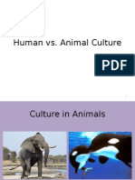 Universalism and Animal Culture