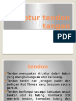 Ruptur Tendon Flexor Extensor