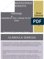 Exposicion Glandulas Sebaceas y Sudoriparas