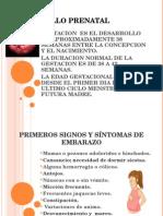 Desarrollo Prenatal Final