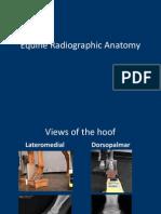 Equine Radiographic Anatomy