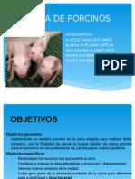 PRACTICA DE PORCINOS