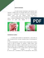 1. Manguito Rotador Músculos e Testes