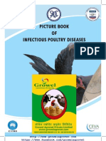 Picture Book of Poultry Diseases.