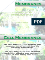 Cellmembraadsfness (1)