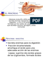 Diabetes Mellitus Pancreas