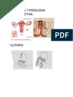 Anatomia y Fisiologia Reproductiva Materno