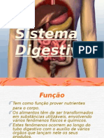 Sistema Digestivo de Sinara