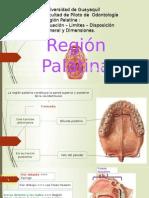 Anatomia Region Platina situacion y limites