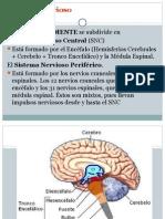 Sistema Nervioso Fernando
