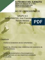 Anabolismo2.pdf