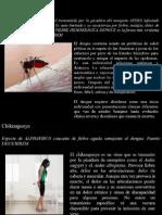 Plan de Acción 2014_2015