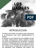 Los Aguajales Expicionos