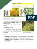 7.Clasificación de Las Plantas