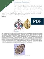 Paragonimosis y Fasciola hepatica