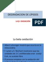 Degradacion de Lípidos Bm.