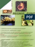 Ciupercile Și Lichenii Biologie