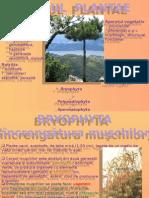 Regnul Plantae - Bryophyta