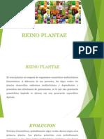 Reino Plantae (UAA)