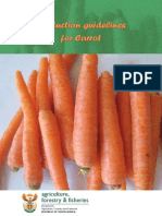 Prod Guide Carrot