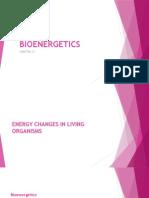 Bioenergetics by Lyn