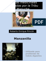 Plantas Medicinales Utilizadas Por La Tribu Mapuche