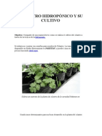 Cilantro Hidropónico y Su Cultivo
