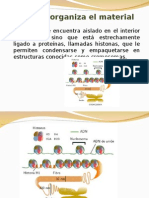 Ppt 2 Nucleo Formas de Organizacion