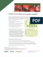 El Boro en El Cultivo de Palma 2013