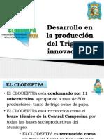 Desarrollo de Plantaciones de Trigo