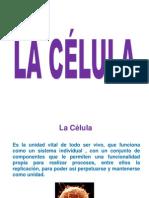 1a celula.pdf