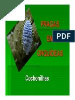 Praga Em Orquideas - Cochonilhas (1)