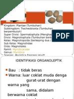 Kolitinida Dan Pala botani