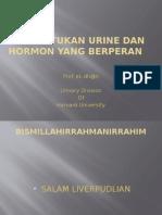 Pembentukan Urine