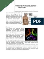 Definición y Funciones Propias Del Sistema Endocrino