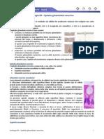 Istologia 09 - Epitelio Ghiandolare Esocrino