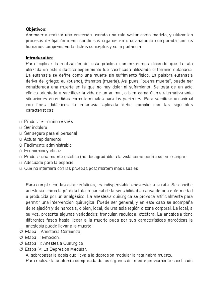 Bonito Anatomía De Rata Modelo - Imágenes de Anatomía Humana ...