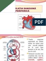 Circulatia sanguina periferica.ppt