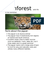 zoolology for rainforest